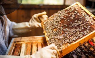 liguria programma triennale apicoltura