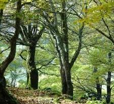 bosco capitale verde
