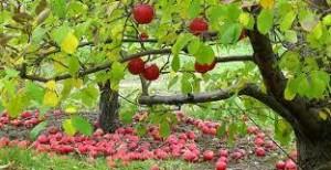 freddo frutteti 3
