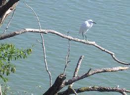 turismo aree protette uccello sul Po