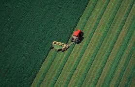 agricoltura sostenibile 1