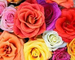 floranga 2
