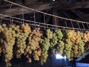 Oltrepò Pavese Codevilla Azienda Montelio grappoli uva passita