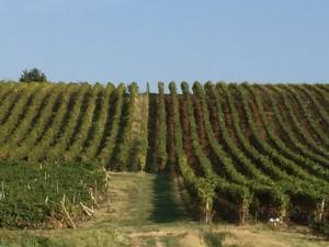 Oltrepo pavese panoramica vigne