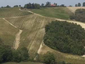 Oltrepopavese panoramica con filari vigne