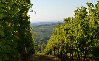 Valtidone Wine Fest cover 2