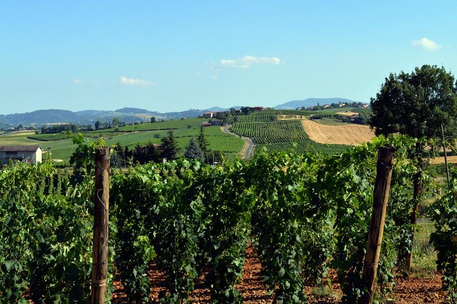 Valtidone Wine Fest panoramica con dettaglio viti