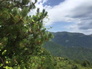 Triora panoramica con pino in primo piano