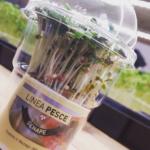 Micro ortaggi senape