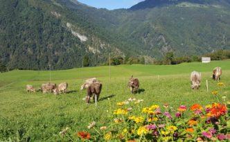 Slovenia_viaggio con la UE Agricoltura