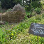 Corte Nigella - Museo delle erbe vive