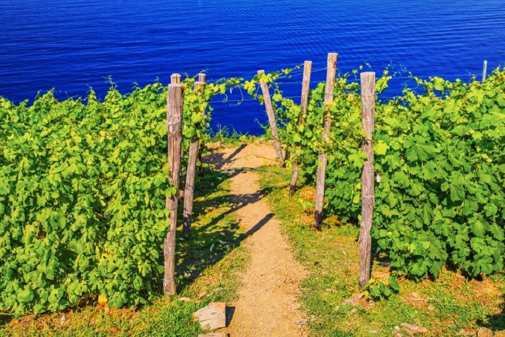 Cinque Terre vini eccellenti